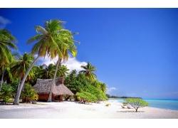景观,舱,热带,海滩,海,棕榈树,砂,夏季,假期251568