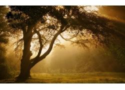 景观,薄雾,树木,森林,草,太阳光线,大气层,夏季258786