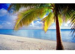 岛,朗伊罗阿诺,法属波利尼西亚,棕榈树,海滩,热带,海,景观,砂,云2