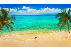 景观,砂,海滩,海,棕榈树,鸟类,飞行,云,热带,加勒比,夏季353916
