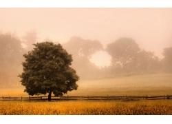 景观,篱笆,树木,薄雾,早上,阳光,领域,草,灌木,新泽西州348091