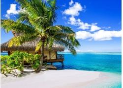 棕榈树,海滩,热带,海,云,夏季,假期,波拉波拉岛,景观197808