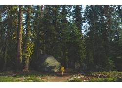 景觀,攝影,美國,北美,優勝美地山谷,杰克海因茲,森林,戶外的女人,
