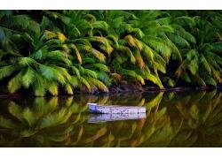 景观,棕榈树,丛林,湖,船,澳大利亚,热带,岛,水,反射272148