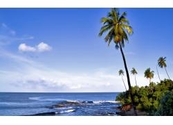 景观,棕榈树,岛,滨211570