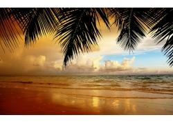 景观,棕榈树,树叶,海滩211511