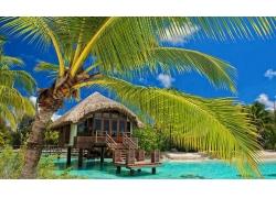 棕榈树,采取,海滩,热带,水,平房,海,夏季,景观198660