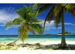 景观,棕榈树,海滩,岛,海,热带,夏季,巴拿马284085