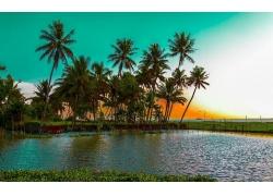 景观,棕榈树,海滩,海,水,日落,热带232144
