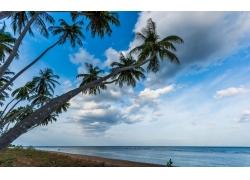 景观,棕榈树,海滩,热带,海,斯里兰卡,云,水246984