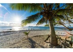 景观,棕榈树,海滩,砂,海,太阳光线,夏季,热带,云,岛246175