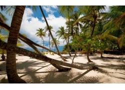 景观,棕榈树,海滩,砂,热带,阴影,云275594