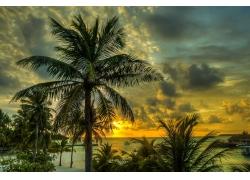 景观,棕榈树,马尔代夫285994