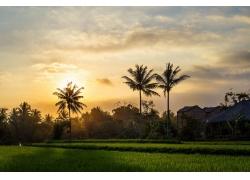景观,棕榈树298501