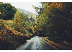 景观,高速公路,植物,树木,摄影671075