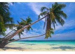 摄影,景观,棕榈树,白色,砂,海滩,热带,海,夏季,岛,菲律宾377932