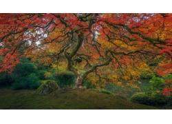 波特蘭,樹木,秋季,華美,植物,爬坡道,苔蘚,太平洋,景觀,國家公園5