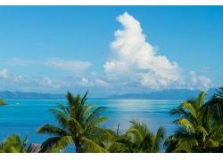景观,云,热带,棕榈树376839