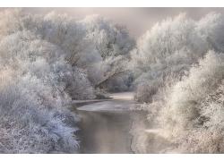 景觀,攝影,河,森林,冬季,霜,雪,樹木,冷,白色,特蘭西瓦尼亞,羅馬