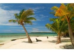 摄影,景观,岛,热带,棕榈树,海滩,白色,砂,海,夏季,墨西哥386568