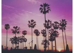 景观,棕榈树,太阳,天空500503