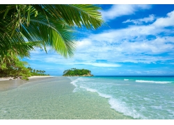 植物,景观,热带,海,棕榈树,海滩,云440305