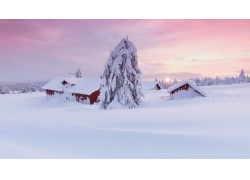 景观,雪,屋392803