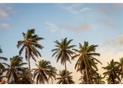 景观,热带,棕榈树452252