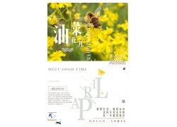 油菜花图片 油菜花海报 (23)