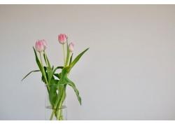 杯子的鲜花