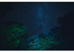 星空下的绿树