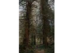 原始森林图片素材