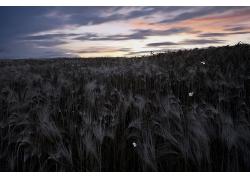 大自然植物风景摄影图片