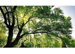 大树绿树摄影图片