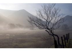 樹木大樹大山霧氣風景風光景觀照片