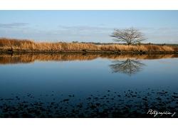 湖泊岸边植物风景景观风光照片