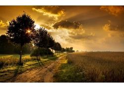 树木乡村道路天空晚霞草地风景风光景观照片