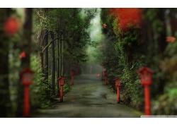 路径森林灯笼树木邮箱林荫小路风景风光景观照片