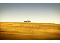 大树荒野植物风景风光景观照片