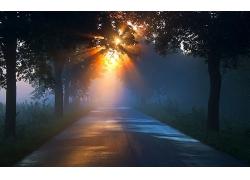 日出公路绿树