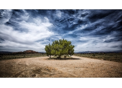 蓝天一棵绿树
