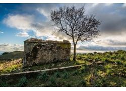 岩石树木草地风景风光景观照片