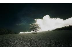 天空草原草地树木风景风光景观照片
