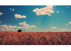 天空芦苇草地建筑小屋风景风光景观照片