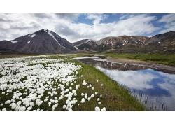 河畔白色的花朵