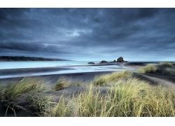 优美美丽海滩沙滩蒲苇芦苇草景观美景高清图片