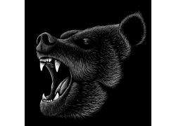 野生动物熊插图矢量