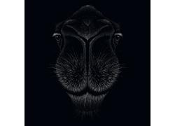 手绘矢量插画 骆驼的一张脸