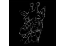 手绘插画 长颈鹿头
