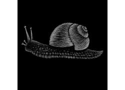 手绘蜗牛插画矢量